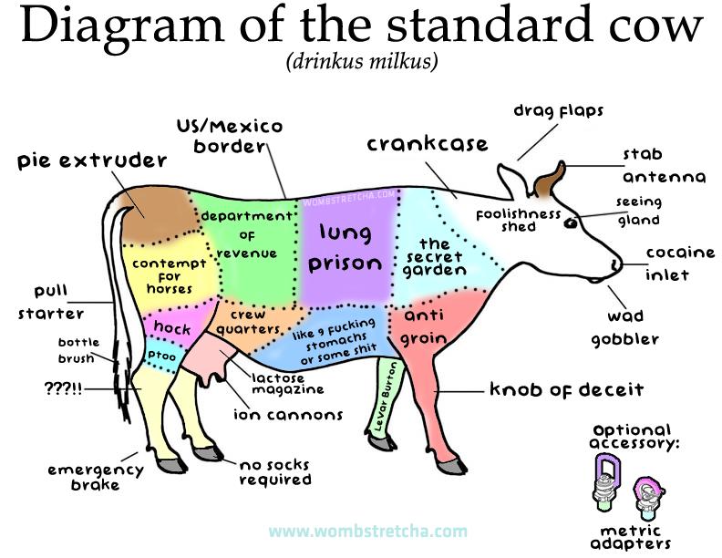 cow diagram1 cow lung diagram wiring diagram all data